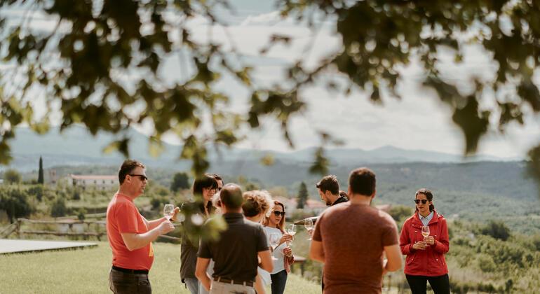 Wine Tours Slovenia Provided by Wine Tours Slovenia