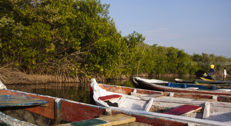 Mangrooves & Birdwatching Photography Tour Provided by Paola H Sanchez