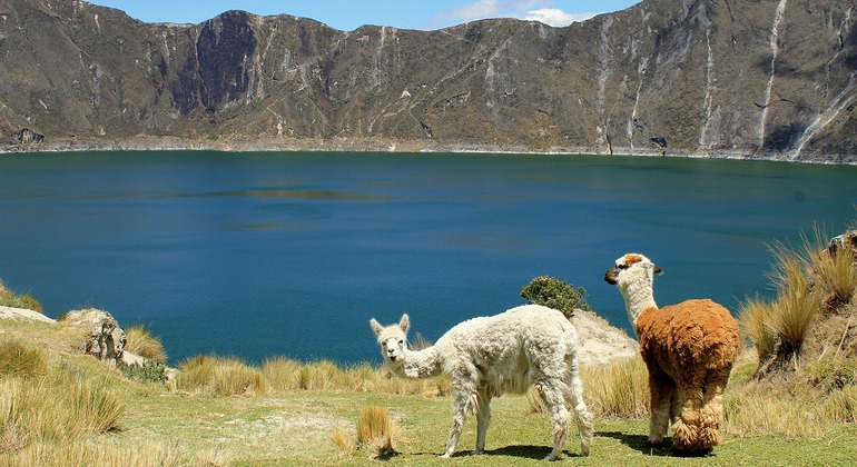 Quilotoa Lagoon and Indian Markets in One Day from Quito Provided by Community Adventures