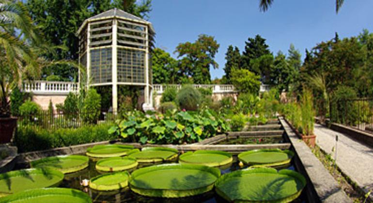 Padua Botanical Garden Free Tour Provided by Padova Free Walking Tour