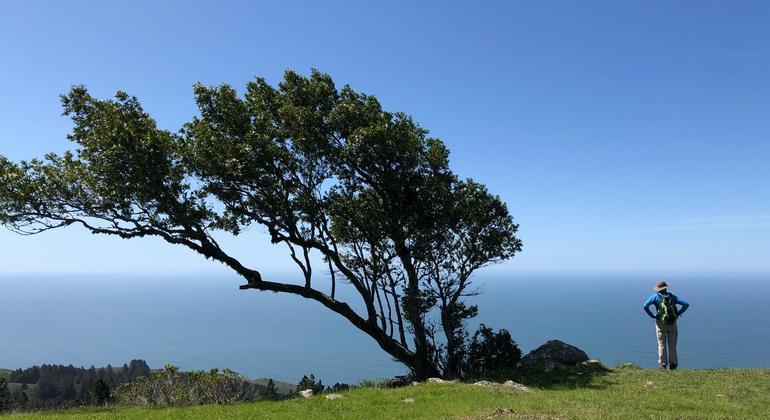 Mount Tam Hiking Tour Provided by Zelig Dertshansky